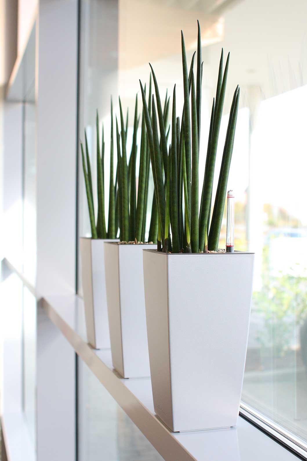 Pflanzen für die Fensterbank