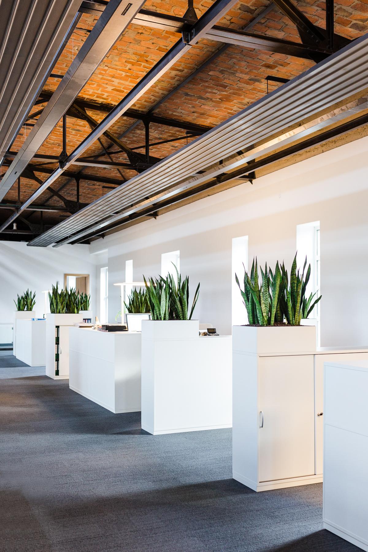Pflanzen fürs Büro