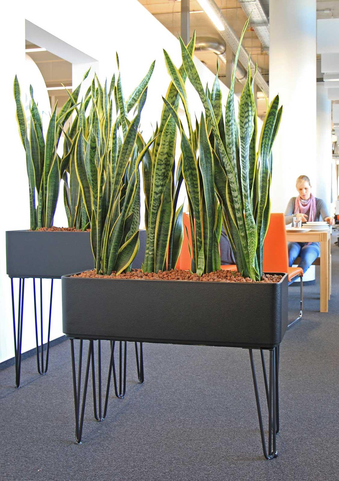 Raumtrennung mit Pflanzen