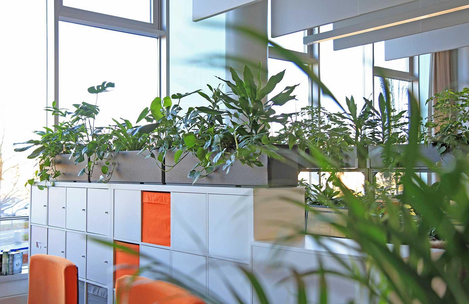 Pflanzen auf Sideboard im Großraumbüro