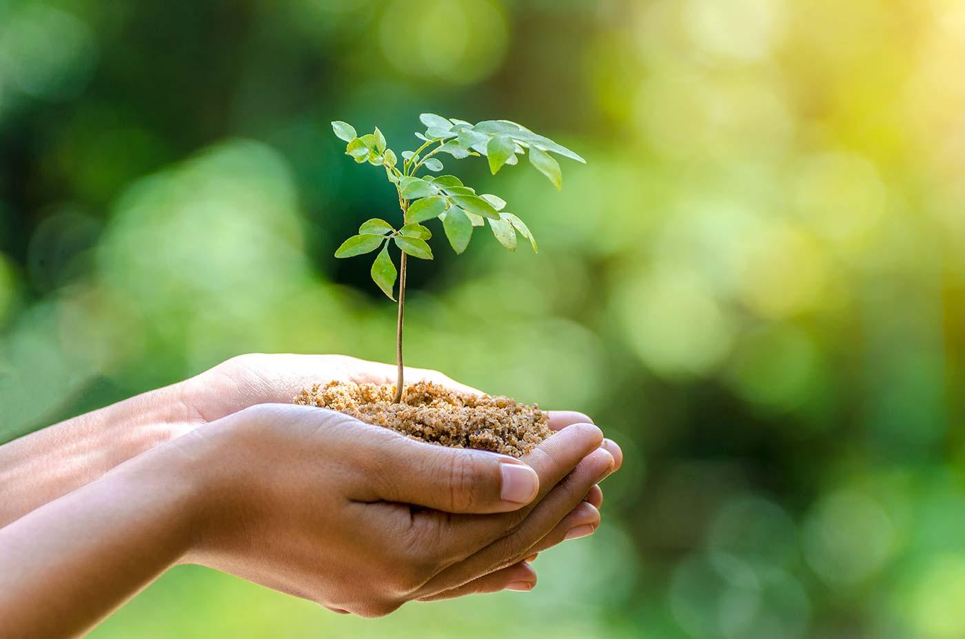 Nachhaltigkeit bei Kremkau